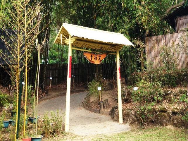 One Day Tour to Nantou‧Painting Shueili Snake Kiln, Bamboo Fragrance