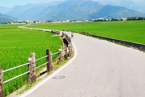 探訪稻米原鄉─金色稻浪好壯觀