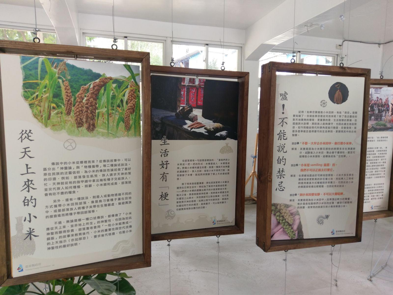 臺東金峰小米學校介紹小米背版