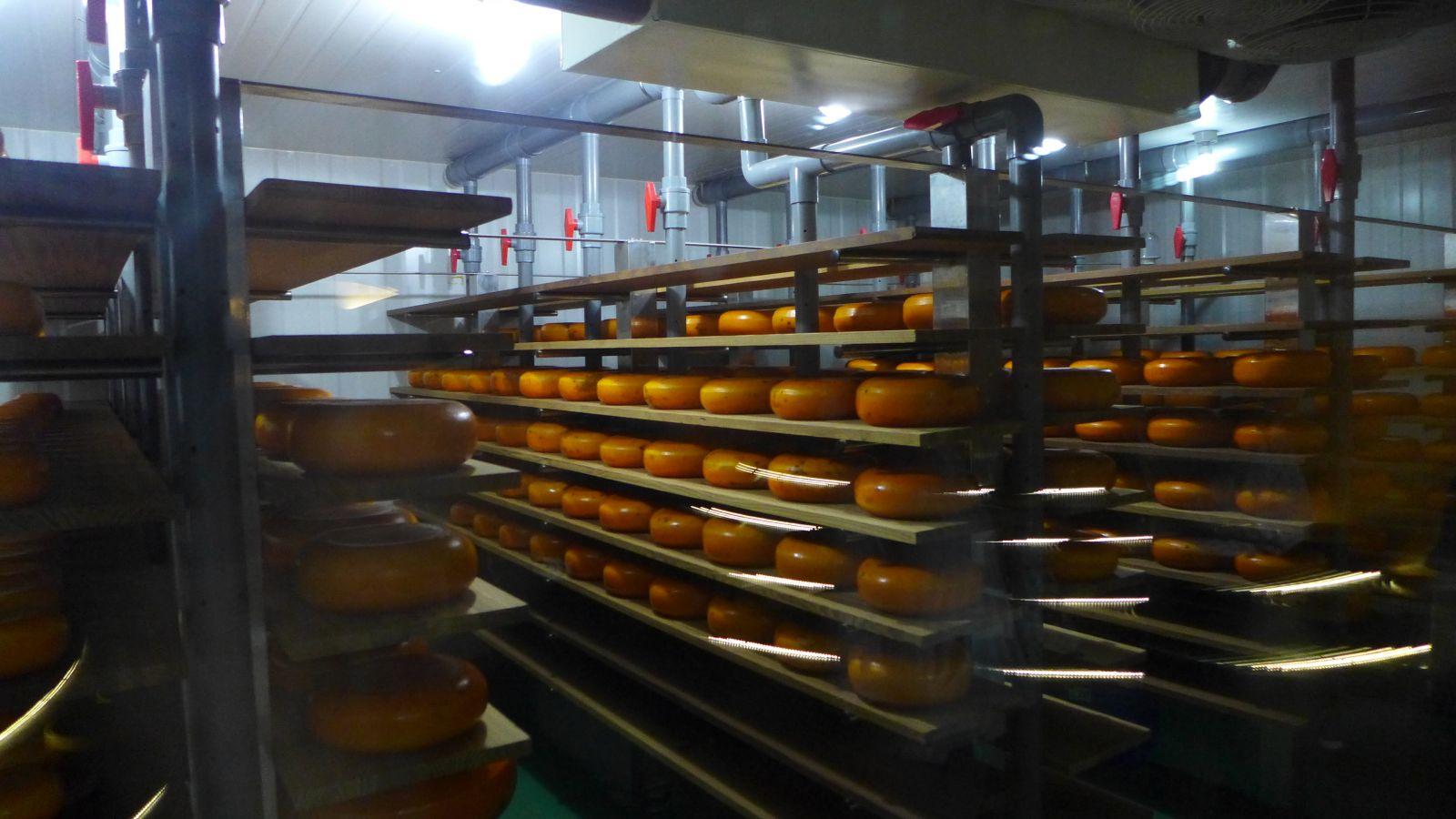 中港溪下游四鄉鎮美食遊憩產業,四方鮮乳酪故事館館內黃金乳酪室。