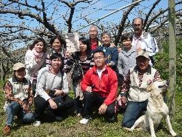 東勢區果樹認養