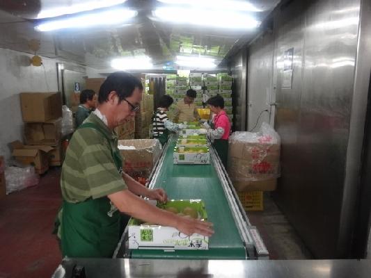 東勢區農會-水果包裝部 店家其他1