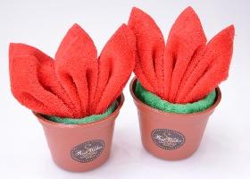 聖誕紅樹苗 其他圖片1