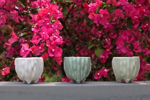不同釉色使甘杯看起像是不同品種的苦瓜,可供消費者選購搭配。 其他圖片2