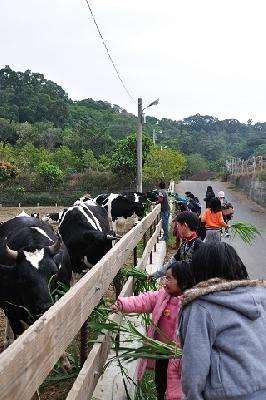 用牧草和牛拔河 其他圖片1