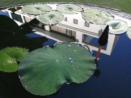 澎湖外婆茶──外部池塘 店家其他3