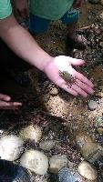 生態導覽-螃蟹觀察 其他圖片2