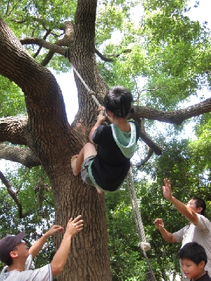 生態導覽-爬樹體驗 其他圖片1