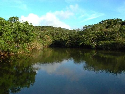 園區有許多溼地,可以觀察水生動植物生態,及觀賞美景。 其他圖片1