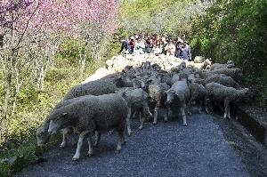 奔羊節 其他圖片3