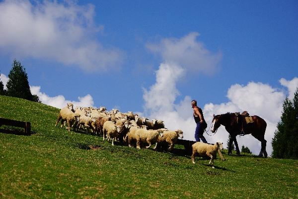 綿羊秀 封面圖片