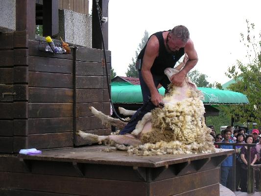 綿羊秀 店家其他2