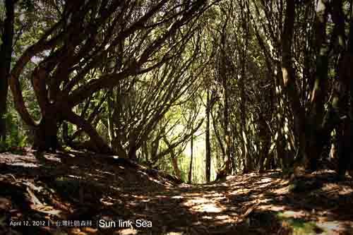 杉林溪森林生態渡假園區