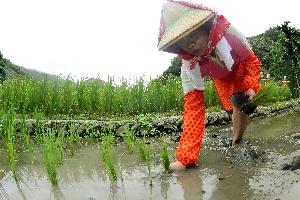 農村生活體驗