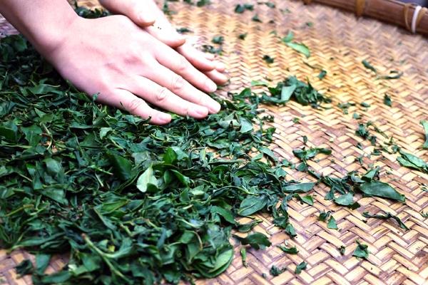 手揉紅茶體驗 封面圖片