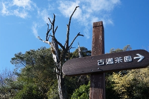 梨山上的古邁茶園標誌